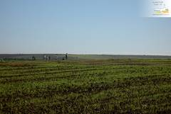 Large scale agriculture near Bouskoura